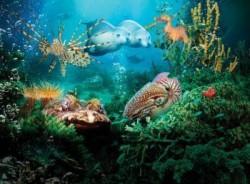 Zemūdens pasaule
