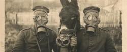 Loomad I maailmasõjas