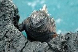 Galapagai
