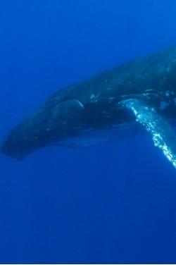 Kai banginiai ir vėžliai rodo mums kelią