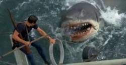 Shark Attack File