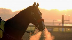 [Equestrian] EQUESTRIAN: Global Champions League - Saint-Tropez (Fra)